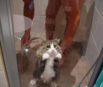 gatto_triste.jpg